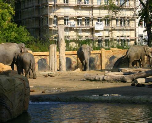 Zoo - Elefanten, Leipzig
