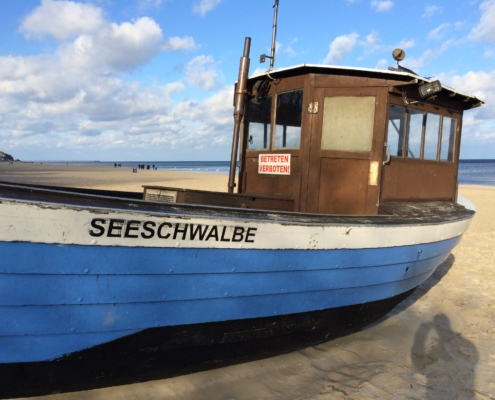Seeschwalbe, Heringsdorf, Usedom, Ostsee