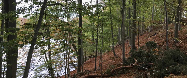 Hellsee, Barnimer Land